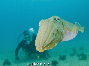 Cuttlefish and Diver, Gozo by Nick Blake 